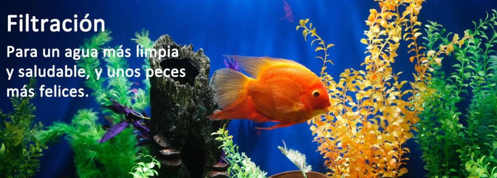 Filtración - Filtros acuario